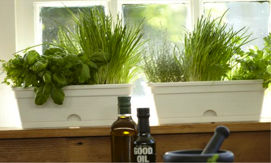 Herb garden windowsill