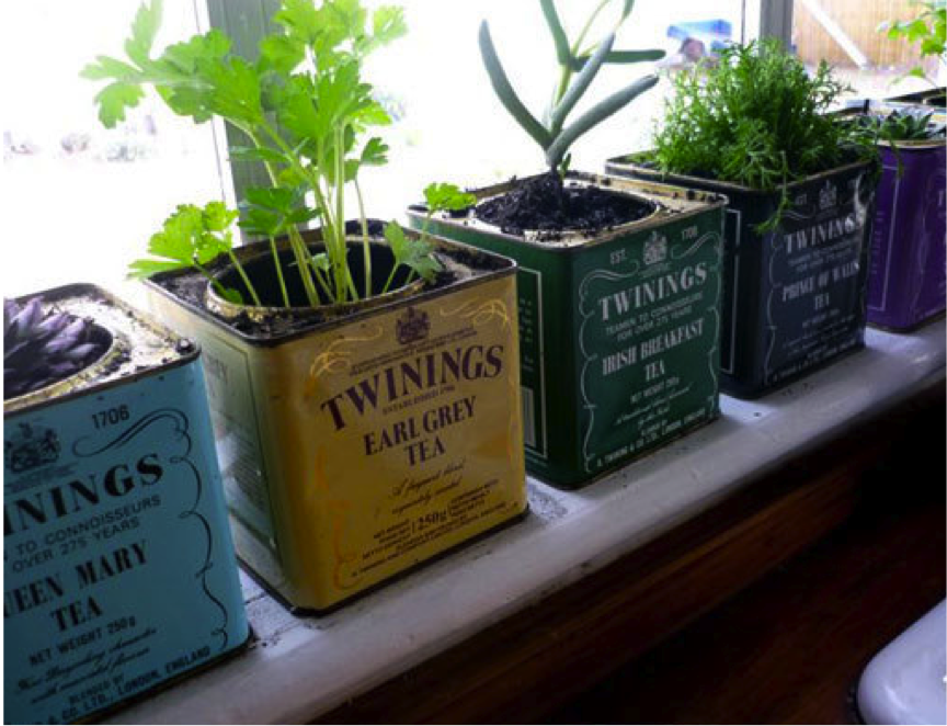 How to Create a Windowsill Herb Garden | Thinking Inside the Box