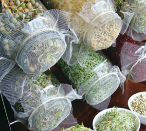 sectional title property, grow sprouts in glass jars