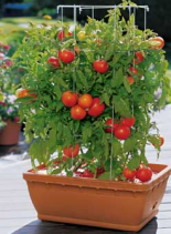 sectional title, balcony gardening, sectional title property